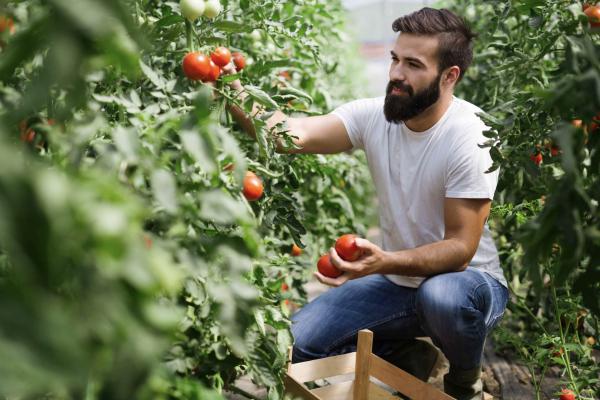 ecofarm ozono pomodori