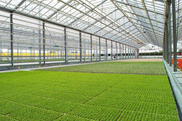 ozono irrigazione ecofarm_1