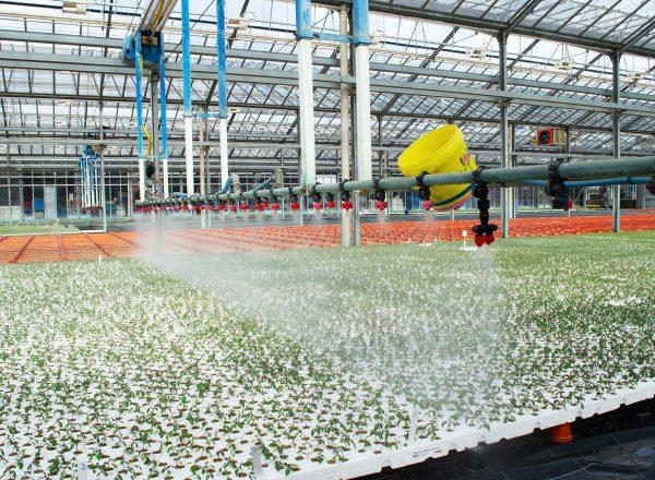 ozono irrigazione ecofarm_3